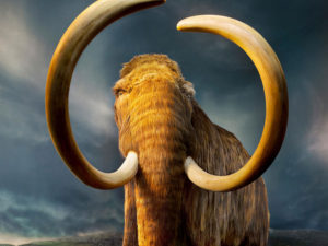 Как отличить бивни слона и мамонта, клык и зуб моржа